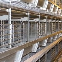 China Automatic Poultry Farmimg Equipments 128birds H Type Hot Galvanized Egg Chicken Battery Cage Poultry Coop on sale