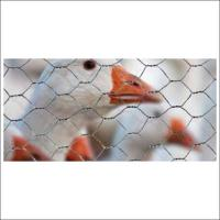 Iron Hexagon Wire Mesh For Raising Animals / Wire Mesh Fence Panels Manufactures