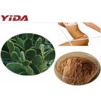 China Weight Loss Ingredient Hoodia Gordonii extract 20:1weight loss slimming  Hoodia gordonii extract Yellow Brown Powder on sale