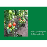 8mm Colorful Spiral Plant Support , Durable Garden Spiral Tomato Stakes Manufactures