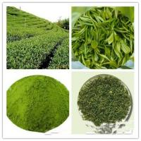 China Green Tea(Powder&Extract); Matcha powder; Freeze- Dried; prevent diabetes;antioxidant factors & anti-aging on sale