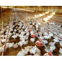 WorldPoultry - Night time cooling pad operation during extremely hot Manufactures