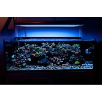 China 600W LED Fish Tank Lights for Coral and Reef on sale