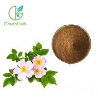 Buy cheap Promote Blood Cell Destruction Rose Hip Extract Rosa Canina L with 20% Flavones from wholesalers