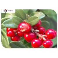 Anti Aging 50% Proanthocyanidins Cranberry Concentrate Powder Manufactures
