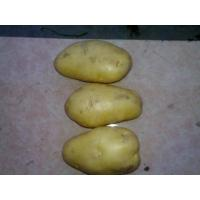 Buy cheap Holland Potato from wholesalers
