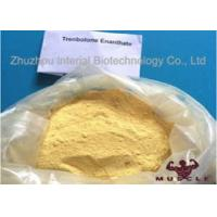 Raw Yellow Crystalline Trenbolone Enanthate Powder , Tren E Steroids For Lean Muscle Manufactures