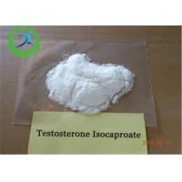 China Anabolic Steroid CAS 15262-86-9 Testosterone Isocaproate Powder for Bodybuilding on sale