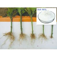 Promote rooting Plant hormone 3-Indole acetic acid 87-51-4 IAA 98%TC Manufactures
