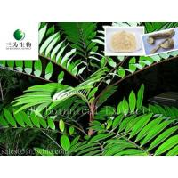 Eurycoma longifolia Jack,Brown yellow Powder Manufactures
