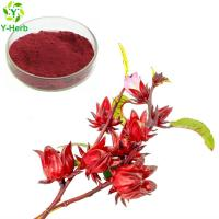 Ruselle Extract / Hibiscus Sabdariffa / Rose Eggplant Powder rose eggplant ruselle anthocyanins extract powder Manufactures