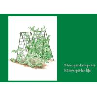 Cucumbers Garden Plant Trellis / Vegetable Garden Trellis Saves Space Manufactures