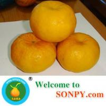 Mandarin Orange Manufactures