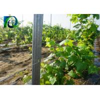 C Type Metal Grape Vine Stakes Metal Provide Full Accessories 1.8-3.5M Height Manufactures