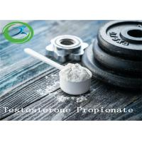 High Quality Bodybuilding Powder CAS 57-85-2 Testosterone Propionate Manufactures