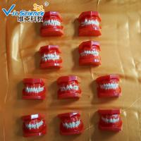 VIC-E8 Ortho Dental Study Models Malocclusions Classification 10 Pieces Manufactures