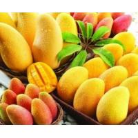 China fruit powder mango juice drink powder factory price/high quality mango seed powder factory on sale