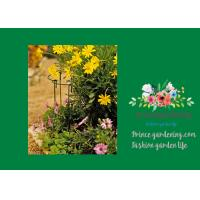 """Garden Metal Curved Plant Support 18"""" Tall With A 7"""" Curved Arm Manufactures"""