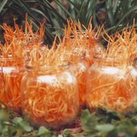 China Herbal Extract/Cordyceps Sinensis Fungus Extract, OEM Orders are Welcome on sale