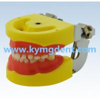 Good price dental kids jaw model Manufactures