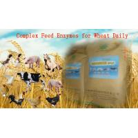 Yellowish Powdered Complex Poultry Feed Enzymes For Wheat Daily Diet Szym-nutriWH Manufactures