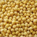 Soybean Isoflavones Extract Manufactures