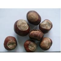 Chinese Buckeye Seed Wilsom Aesculus chinensis Bunge fruit Suo luo guo Manufactures