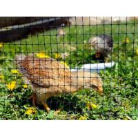 Oriented Plastic Poultry Netting - Keep Predator Out Manufactures