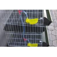 Metal Wire Layer Quail Cages for Sale Manufactures