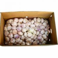 Chinese Normal White Garlic Manufactures