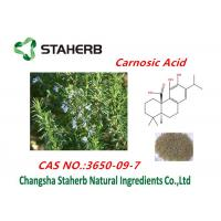 Rosemary Leaf Extract Of Ursolic Acid,Rosmarinic Acid,Carnosic Acid Powder Manufactures