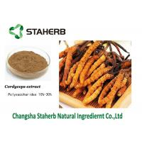 Mushroom extract Cordyceps extract Polysaccharides Male Enhancement Powder Manufactures
