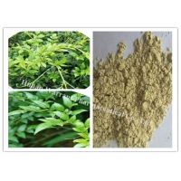 98% Dihydromyricetin Vine Tea Extract Manufactures
