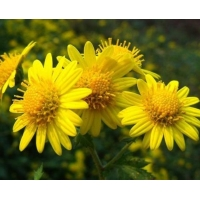 Buy cheap 4:1 TLC Chrysanthemum Flower Extract Powder Water Soluble from wholesalers