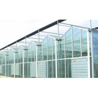 China Agricultural Intelligent Glass Multi Span Greenhouse Galvanized Steel Structure on sale