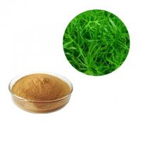 China Brown Color Rosemary Antioxidant Extract Powder Leaf Part Natural Herb Extract on sale