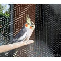 stainless steel 304/316 Aviary mesh for bird cages netting/aviary building Manufactures