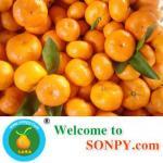 Baby Mandarin Manufactures