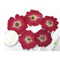 Diameter 3.5CM Red Dried Flowers , Dry Rose FlowerFor Valentines Day Party Manufactures
