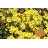 Buy cheap Antivirus Chrysanthemum Flower Extract Powder Polysaccharides Active Ingredients from wholesalers