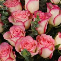 Buy Fresh cut rose flowers natural flowers high quality hongxiu rose from flower base wholesale prices export Manufactures