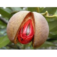 Nutmeg oil (Source: plants nutmeg, nutmeg to the dry kernel) Manufactures