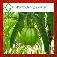 Herbal Extract Garcinia cambogia extract HCA 50%-75% ingredient for weight loss Manufactures