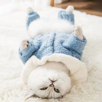 Warm Cats Wearing Clothes Environment Friendly Bunny Ears Hoodie Pullover Design Manufactures