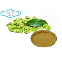 China Natural Herbal Extractsgreen coffee bean extract powder 50 % chlorogenic acid on sale