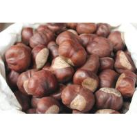 China manufacturer supply Horse Chestnut Extract, Aescin 20% 40% 98%, CAS No.: 6805-41-0, Aesculus hippocastanum Extract on sale