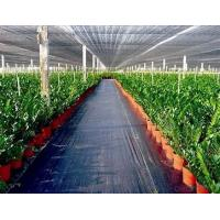 Weed Control Agriculture Non Woven Fabric Plant / Ground Cover Breathable Anti Frost Manufactures