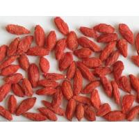 Organic Dried Natural Wolfberry Fruit Goji Berry / Wolfberry Strengthen Immunity Manufactures