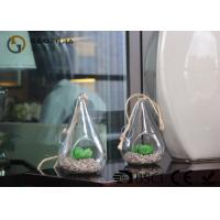 Glass Plant Holders / Glass Plant Terrarium For Indoor Decoration for sale