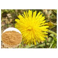 Anti Cancer Dandelion Root Powder Natural Extraction Improving Liver Function Manufactures